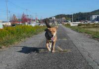 散歩20111126-2