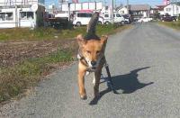 散歩20111126-3