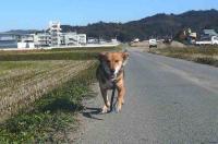 散歩20111126-4
