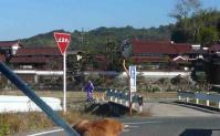 散歩20111126-5