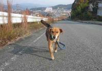 散歩20111127-1
