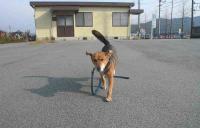 散歩20111127-2