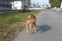 散歩20111127-3