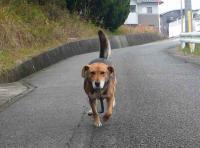 散歩20111128-1