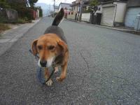 散歩20111128-4
