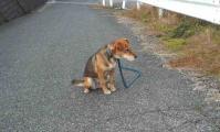 散歩20111129-2