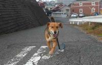散歩20111129-3