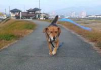 散歩20111129-4