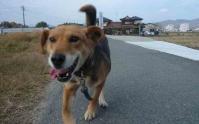 散歩20111130-2