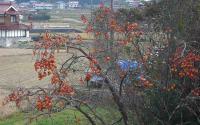 散歩20111130-4