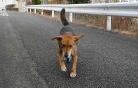 散歩20111227-1