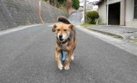 散歩20111227-2