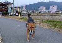 散歩20111227-4