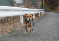 散歩20111228-2