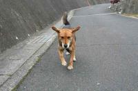 散歩20111228-4