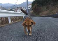 散歩20111229-3