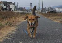 散歩20111229-5