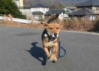 散歩20111230-2