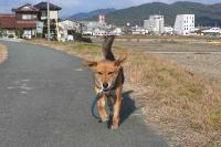 散歩20111230-5