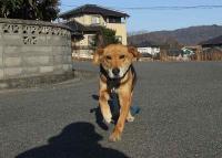 散歩20111231-2