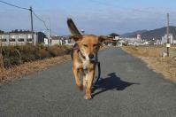 散歩20111231-3