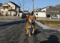散歩20120126-3