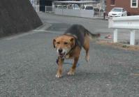散歩20120128-2