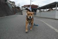 散歩20120129-2
