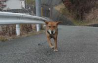 散歩20120130-2