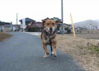 散歩20120130-3