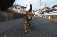 散歩20120131-2