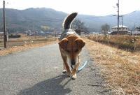 散歩20120131-4