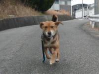 散歩20120221-2
