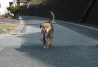 散歩20120223-3