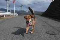 散歩20120223-4