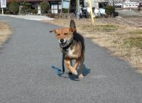 散歩20120224-3