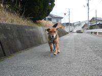 散歩20120225-2