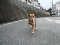 散歩20120225-3