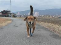 散歩20120225-4
