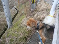 散歩20120225-5a