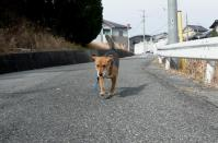 散歩20120226-3