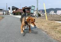 散歩20120226-4