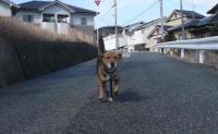 散歩20120227-2