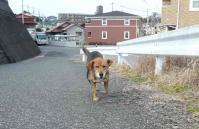 散歩20120228-2