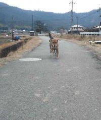 散歩20120228-4