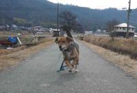 散歩20120228-5