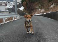 散歩20120229-3