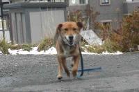 散歩20120229-4