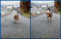 散歩20120323-3