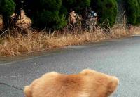 散歩20120323-4